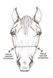 Lightfoot Horse Farm