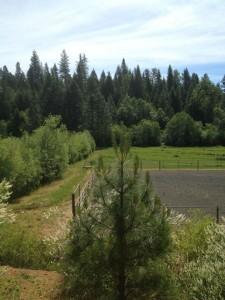 Meadowbrook Ranch 1